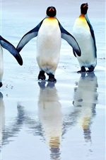 Preview iPhone wallpaper King penguins walking on the beach, sea