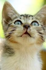Preview iPhone wallpaper Kitten, tabby, eyes, glare