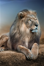 Leão, pedra, lua