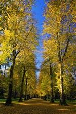 Preview iPhone wallpaper Park, Arboretum, road, alley, autumn, sunshine