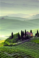 Preview iPhone wallpaper Pienza, Tuscany, Italy, spring scenery, fields, trees, morning, fog, green