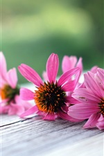 Preview iPhone wallpaper Pink flowers macro, wood board