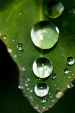 Plant close-up, leaf, water drops