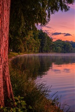 Preview iPhone wallpaper Purple dusk, forest, lake