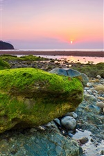 Sea, beach, rocks, stones, moss, morning, dawn, sunrise