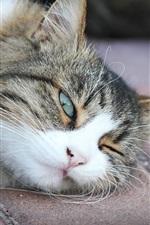 Preview iPhone wallpaper Sleepy cat