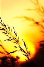 Preview iPhone wallpaper Sunset, grass, evening