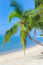Preview iPhone wallpaper Tropical beach, coconut palm, sea, sky, clouds, sunlight