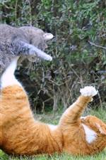 iPhone обои Две кошки нападают оборону