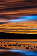 Preview iPhone wallpaper USA, New Mexico, preserve, lake, birds, dawn, sky, clouds