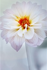 Preview iPhone wallpaper Vase, flower, dahlia, white style