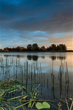 Preview iPhone wallpaper Water, grass, trees, lake, sunset, cloudy sky