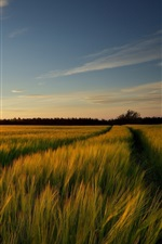 Preview iPhone wallpaper Wheat fields nature landscape, sunrise