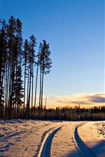Preview iPhone wallpaper Winter, sunrise, snow, trees, forest, road