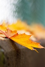 Preview iPhone wallpaper Yellow maple leaf, bokeh