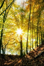 Preview iPhone wallpaper Autumn forest, trees, light, sun rays