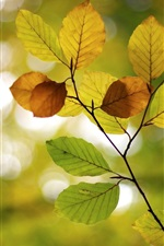 Preview iPhone wallpaper Autumn, leaves, blur, bokeh