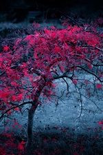 Preview iPhone wallpaper Autumn lonely tree, red leaves, dusk