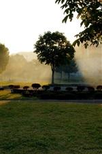 Autumn park, sunrise, bike, trees