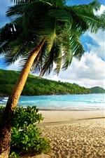 Beach landscape, island, sea, palm trees, sky, clouds