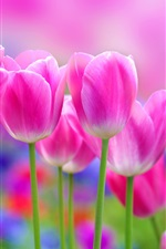 Preview iPhone wallpaper Beautiful pink tulips flowers, blur background