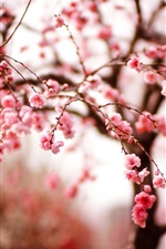 Preview iPhone wallpaper Cherry flowers, spring, branches, pink