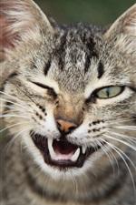 Cute kitten, fangs, whiskers, green eyes