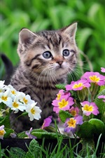 Preview iPhone wallpaper Cute kitten, white and purple flowers
