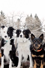 Preview iPhone wallpaper Dogs friends, winter