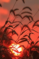 Preview iPhone wallpaper Grass, sun, sunrise, red style