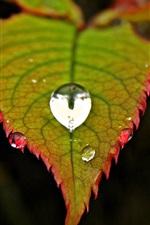 Preview iPhone wallpaper Green leaf, water drop, blur