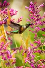 Preview iPhone wallpaper Hummingbird, bird, pink flowers