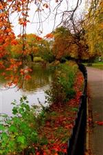 Folhas, parque, árvores, floresta, outono, passeio, rio