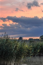 Preview iPhone wallpaper Nature scenery, lake, reeds, morning, summer