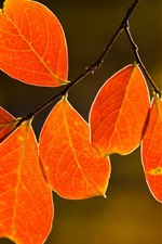 Preview iPhone wallpaper Nature, tree, autumn red leaves