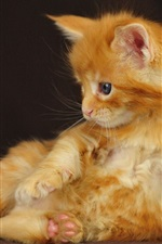 Preview iPhone wallpaper Orange kitten side view