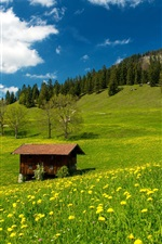 Preview iPhone wallpaper Pasture, Bavarian Alps, Germany, grass, green field, flowers