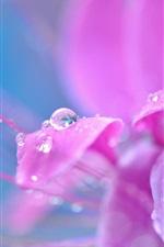 Preview iPhone wallpaper Pink flower petals close-up, dew, water drops