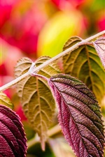 Preview iPhone wallpaper Purple leaves macro, nature plants