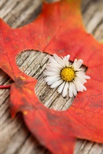 Preview iPhone wallpaper Red maple leaf, white flower, heart shape
