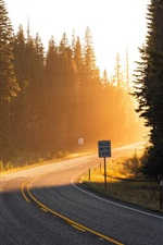 Road, sun rays, light, forest, trees, spruce