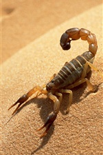Preview iPhone wallpaper Scorpion in the desert
