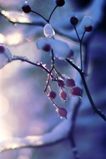 Preview iPhone wallpaper Snow, winter, tree, branches, berries, sun, bokeh