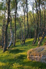 Preview iPhone wallpaper Spring forest trees, grass, stone