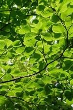 Summer green leaves, twigs, sun