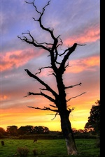 Preview iPhone wallpaper Sunset, green grass, trees, animals, red sky