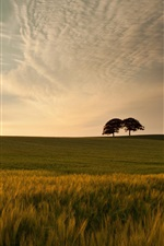 Sunset nature, green meadow, grass, trees