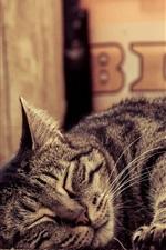 Tabby, sleeping cat, paws