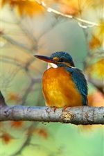 Preview iPhone wallpaper Tree branch, yellow leaves, autumn, bird, kingfisher