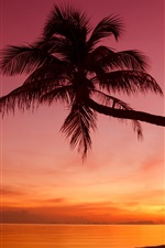 Preview iPhone wallpaper Tropical, sunset, palm trees, silhouette, beach, sea